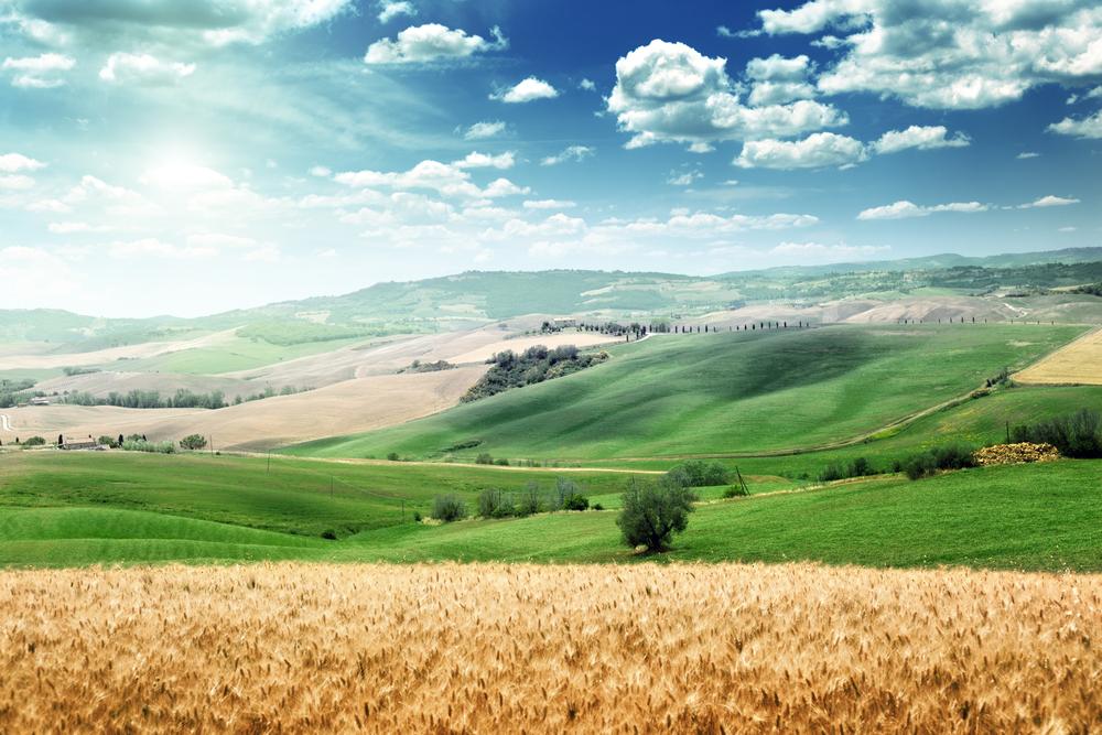 Kako vam mogu pomoći poticaji za marketing u poljoprivredi?